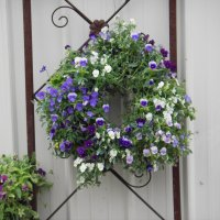 A living viola wreath